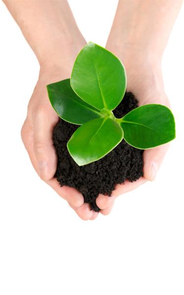 KERENMACABI_web_hands_plant